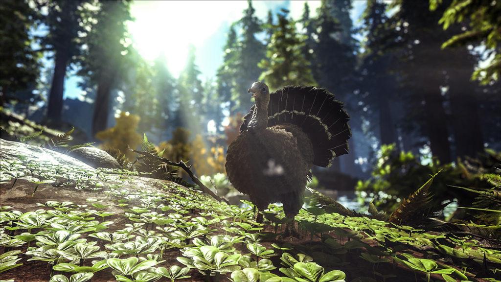turkeytrial2_web